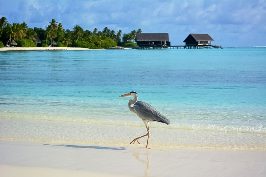 The Sunny Side of Life, Maldives Experience!